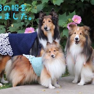 しーくーはーのわんこ服♡お揃いで編む♡