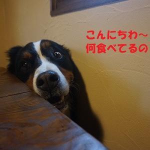 バニジャン2017~前日~
