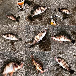 約10日ぶりの釣りで久々入れ食いを味わう事が出来ました。