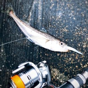 ハタハタing 釣り納めは爆釣とはいかず。