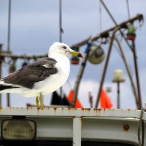 漁港での釣りに於いての注意事項が新潟県よりアナウンスされました。