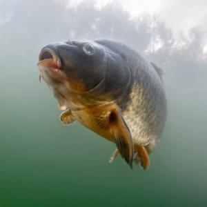 孤立した湖や池に魚はどうやって移動するのかようやくそのプロセスが明らかに。