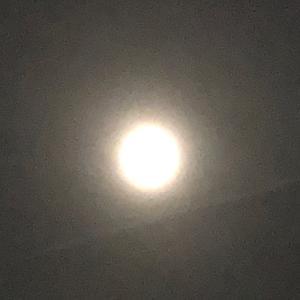 朧月夜、月が照らす中ひたすら餌木を投げる。