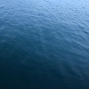 潮が悪かったんだ、きっと。