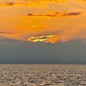 釣れ始めたのは日没後から。