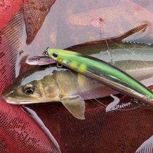 新潟県内で「リール付きでの疑似餌によるアユ釣り」は出来るのか???