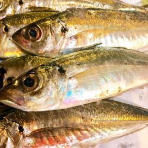 【サビキ釣り】日和山浜の突堤で家族の前でどうしても豆アジを釣り上げたい方に向けたちょっとしたコツ。