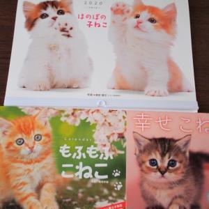 2020猫カレンダーとおジャマ猫