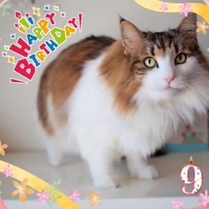 祝☆ぴーち9歳!