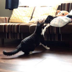【じゃんけんタイムあり】猫のふんばる姿を盗撮…毎日の小さな冒険