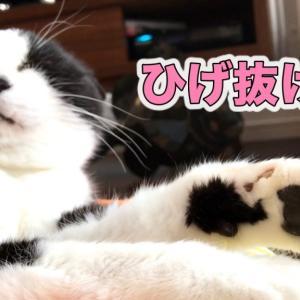 抜けたヒゲで遊ばれる猫、パパになぐさめてもらう