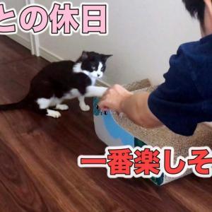 休日のパパと遊んで嬉しそうな猫が可愛い