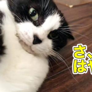 撫でられたい時に足元でコロリンする猫が可愛い【じゃんけんタイムあり】
