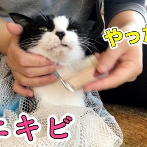 【猫ニキビ対策】顎の黒ゴマにノミ取り&スリッカーブラシでお手入れ