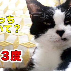 クーラー嫌いな猫おむすびさんの最近の過ごし方