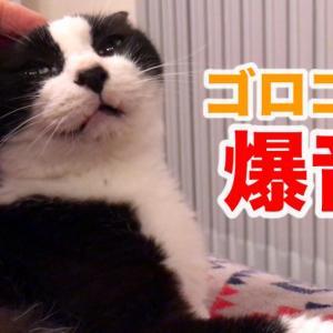 【さよならストレス】猫による3分間のゴロゴロ音セラピーASMR