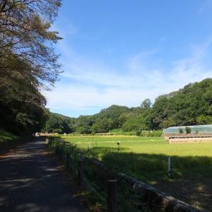稲刈りシリーズ その1    訪ねた田んぼは横浜市青葉区にあり、隣は町田市と川崎市というロケーションだった。