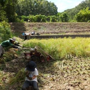 稲刈りシリーズ その2 米作りというのは一年を通じた労働のかたまりのようだ。