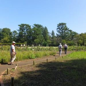 武蔵小金井にある「江戸東京たてもの園」と「小金井公園」の秋の一日  シリーズその2/全4回