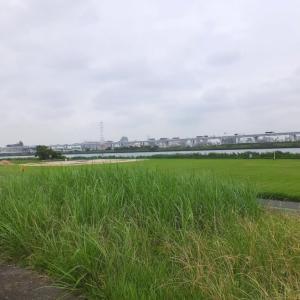 荒川の河川敷散歩をしたあとバスで亀戸に出て「文殊」の春菊蕎麦を食べて帰った