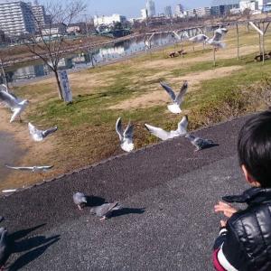 カモメと遊ぶ    旧中川河畔