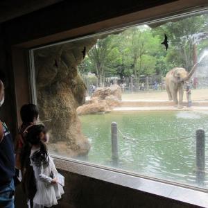 上野動物園は申込制でゆったりと見て回れた