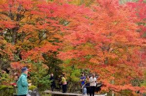 色づく白樺湖畔 紅葉前線スタート                    長野日報