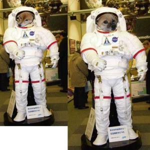 宇宙に飛んだパティとむう。ムムリクさんと一緒に遊んでいるね、きっと。    2015年の今日 6月17日に掲載