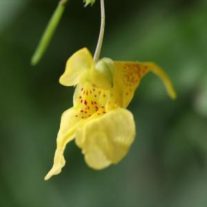 久しぶりにカメラをもって里山に出かけ、日本伝来の野生の蘭の花の写真を撮ってきた。栄町のKさんからの便り