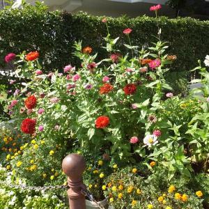 京葉道路沿いで見た花々と 亀戸中央公園の樹々の花