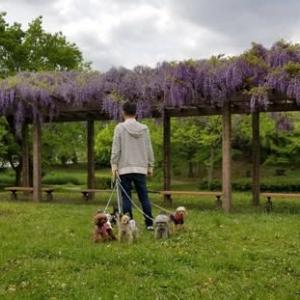 藤の花の公園♪