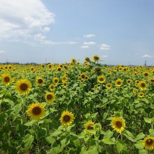日本の芝刈機は高いですか?
