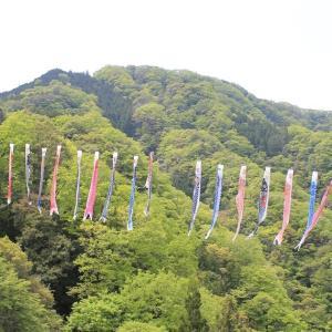 <観光体験記>竜神大吊橋 鯉のぼり祭り