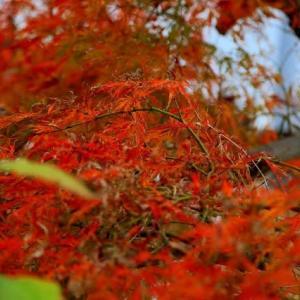 我が菜園も秋