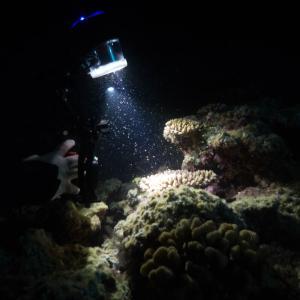 サンゴの産卵 IN 真栄田