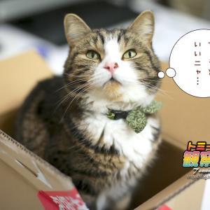 ★ 今日はアスクルの箱…(=^‥^=)