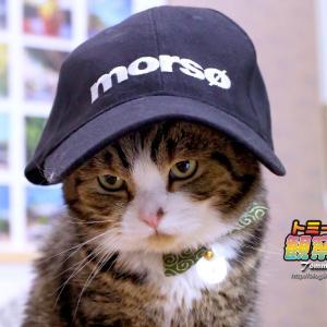 ★ 帽子チャレンジ!d(=^‥^=)b