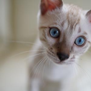ブルーの瞳 (*^^)v