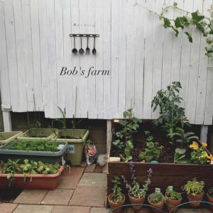 開墾! Bob's farm