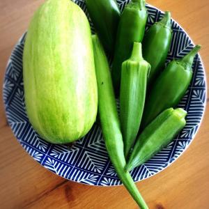 韓国かぼちゃ(エホバク)初収穫しました。