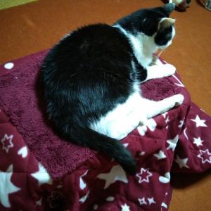 炬燵と猫の親子