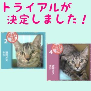 10月9日の【猫の譲渡会@豊田市動物愛護センター】の結果報告