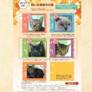 10月13日(日)開催【猫の譲渡会@豊田市動物愛護センター】
