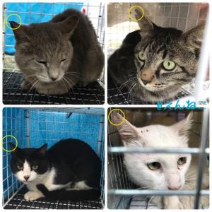 T5町の地域猫活動〜オス猫のみリターン〜