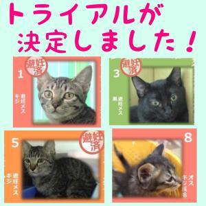 10月13日の【猫の譲渡会@豊田市動物愛護センター】の結果報告