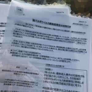 T5町の地域猫活動〜パルボ発生を公表した理由〜