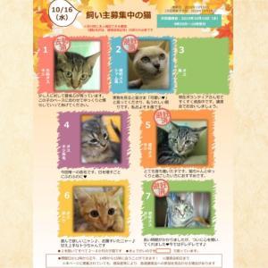 10月16日(水)開催❗️【猫の譲渡会@豊田市動物愛護センター】