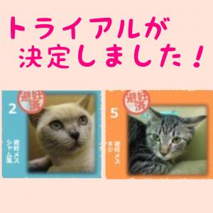 本日の【猫の譲渡会@豊田市動物愛護センター】の結果報告♫