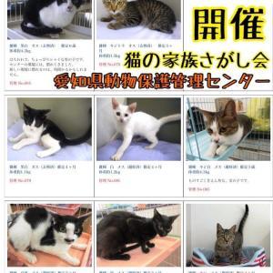 10月19日(土)開催『猫の家族さがし会@愛知県動物保護管理センター(本所)』