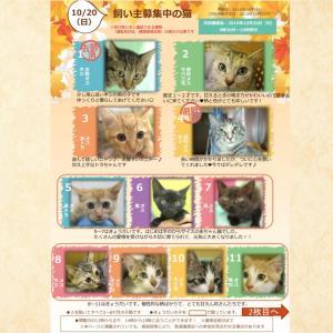 10月20日(日)開催‼️【猫の譲渡会@豊田市動物愛護センター】